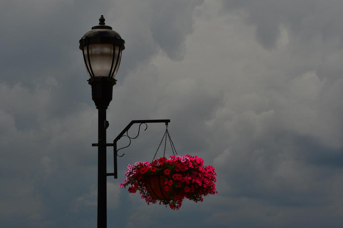 Stormy Flowers