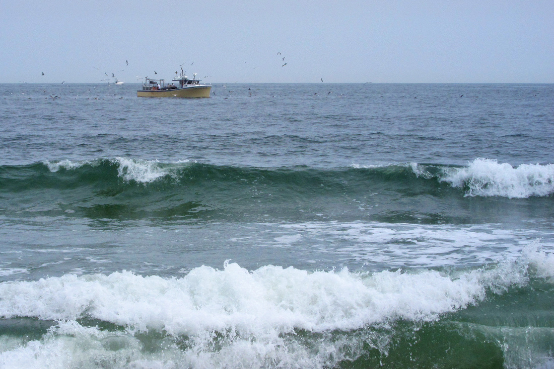 Gull Fishing