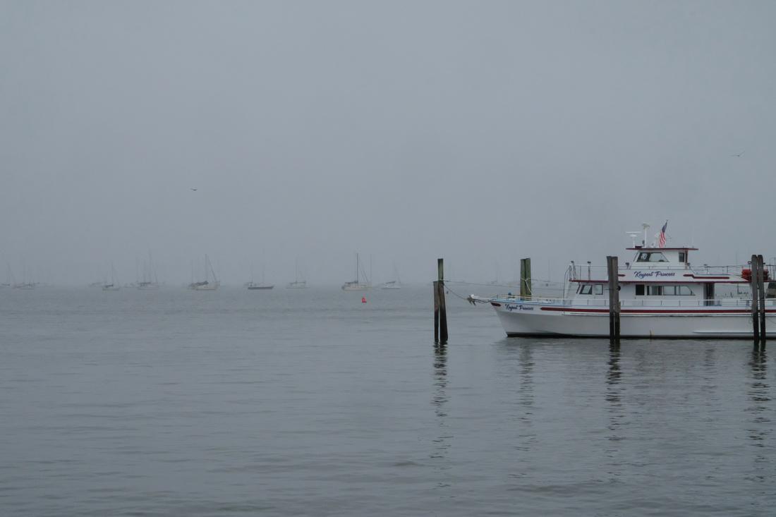 Foggy Fleet