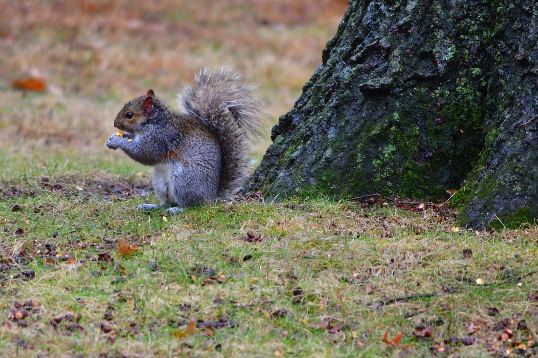 Wet Squirrel