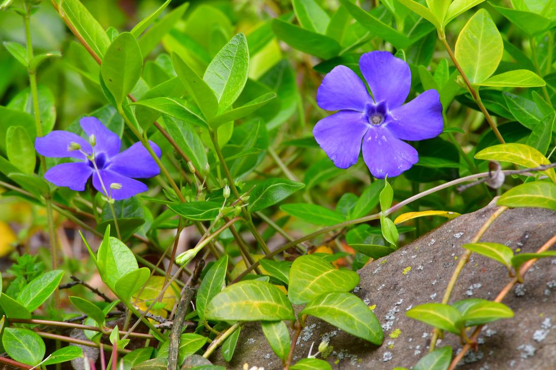 Five Petals