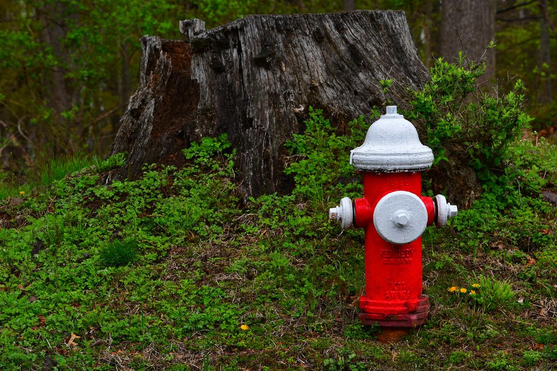 Stump and Hydrant