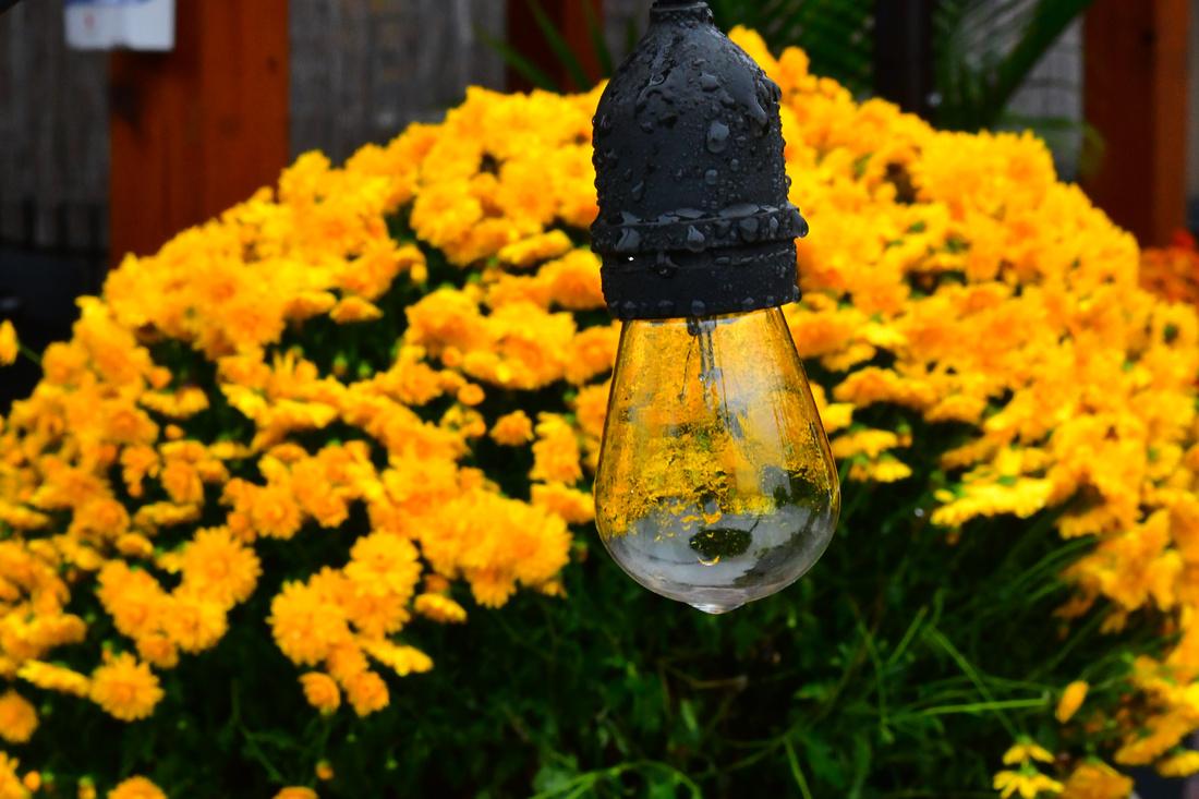 Wet Bulb